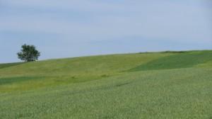 Teren agricol - Comuna Vurpăr